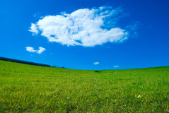 Green lawn and sky blue Royalty Free Stock Photos
