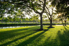 Green lawn of Suan Luang Rama 9 Park in the morning Stock Photo