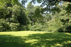 Green lawn in the summer park. A small glade with trees and a green grass in the city summer park stock images