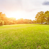 Green lawn with sunlight Stock Photo