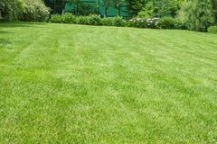 Green lawn. Taken sloped for drainage. Bush in the background Royalty Free Stock Image