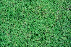 Green lawn texture background. Green grass background texture. top view stock photos