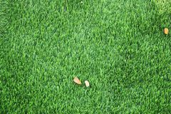 Green lawn texture background. Green grass background texture. top view stock image