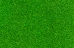 Green lawn texture Royalty Free Stock Photos