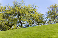 Green Lawn and tree Royalty Free Stock Image