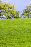 Green Lawn and tree Royalty Free Stock Photos