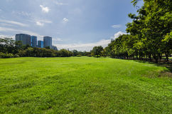 Green lawn with tree and buildings Royalty Free Stock Image