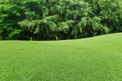 Green lawn and tree Stock Images