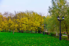 A Green Lawn with Trees in Autumn Season Stock Photo