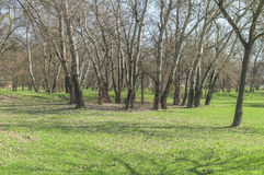 Green lawn with trees in big public park Stock Image