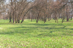 Green lawn with trees in big public park Royalty Free Stock Photography