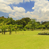 Green lawn and trees Royalty Free Stock Images