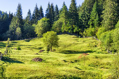 Green lawn with trees near forest Stock Photography
