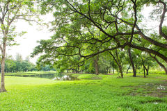 Green Lawn and Trees stock photography