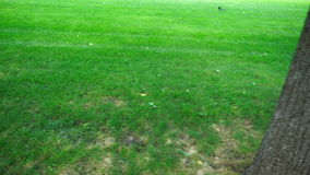Green lawn with trees stock video footage