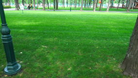 Green lawn with trees in the park stock video footage