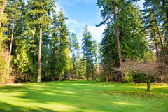Green lawn with trees in the park Stock Images