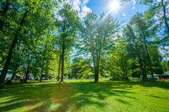 Green lawn with trees in park Royalty Free Stock Photos