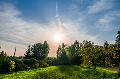 Green lawn with trees in park under sunny light stock images