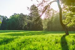 Green lawn with trees in park under sunny light royalty free stock images