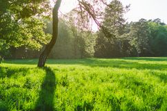 Green lawn with trees in park under sunny light.  stock image