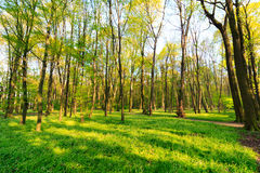 Green lawn with trees in park under sunny light Stock Image