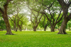 Green lawn with trees Royalty Free Stock Photography