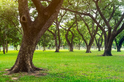 Green lawn with trees Royalty Free Stock Image