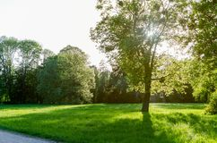 Green lawn with trees in park under sunny light royalty free stock photos