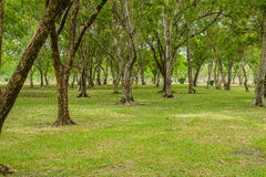 Green lawn with trees in park Stock Photo