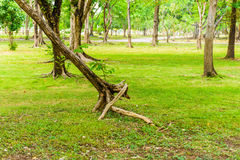 Green lawn with trees in park Royalty Free Stock Photo