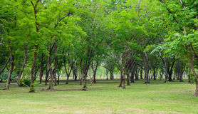 Green lawn with trees in park Stock Image