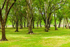 Green lawn with trees in park Royalty Free Stock Image