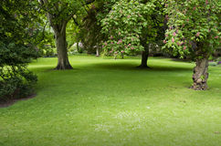 Green lawn with trees in park in York, UK, Europe Royalty Free Stock Photo