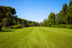 Green Lawn and Trees Royalty Free Stock Photo