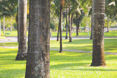 Green lawn with trees Stock Photos