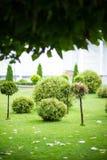 Green summer park Stock Photos