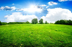 Green lawn and trees Royalty Free Stock Image