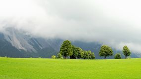 Green lawn and trees with wooden stable in ramsau dachstein stock image