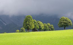 Green lawn and trees with wooden stable in ramsau dachstein royalty free stock photography