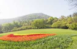 The green lawn and tulips flowers Royalty Free Stock Photo