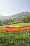 The green lawn and tulips flowers Stock Photos