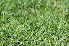 Green Lawn turf abstract background Royalty Free Stock Photo