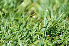 Green Lawn turf abstract background Stock Photos