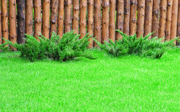 A green lawn Stock Photo