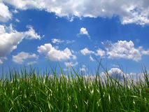 Green lawn under blue sky. Green lawn under cloudy blue sky Stock Image