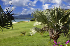 Green lawn under palm trees, sea and mountains on a background. Mauritius Stock Photo