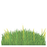 Green lawn on a white background. For web design Stock Image