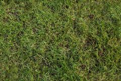 Green lawn after the winter as a seamless pattern, spring garden Royalty Free Stock Image
