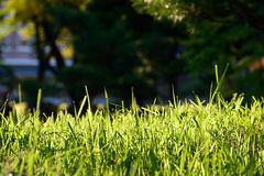 Green Lawns Stock Images